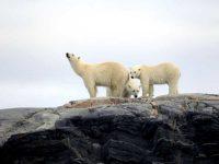 2021 12-Daagse Hurtigruten expeditie - De ultieme Spitsbergen expeditie