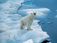 2022 6-Daagse Spitsbergen en polar beer expeditie